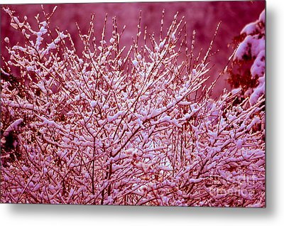 Metal Print featuring the photograph Dreaming In Red - Winter Wonderland by Susanne Van Hulst