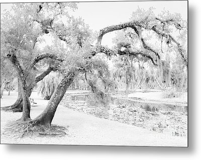 Dreams Without Color Metal Print by Liesl Walsh