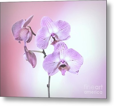 Metal Print featuring the photograph Dreamy Pink Orchid by Linda Phelps