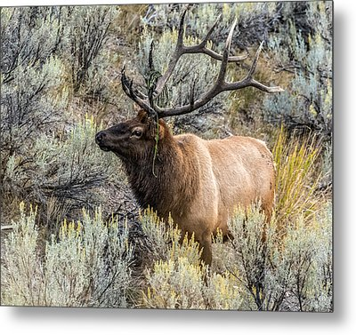 Metal Print featuring the photograph Dressed For Rut by Yeates Photography