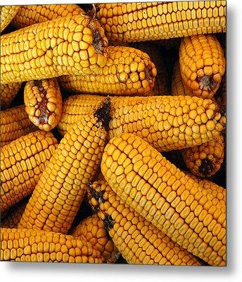 Dried Corn Cobs Metal Print