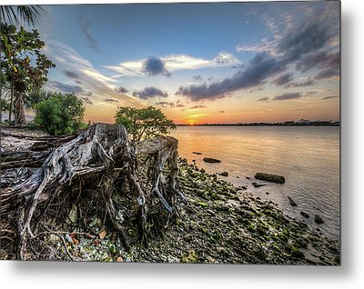 Metal Print featuring the photograph Driftwood At The Edge by Debra and Dave Vanderlaan