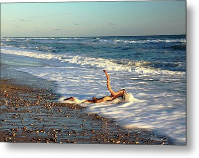 Driftwood In The Surf Metal Print by Roupen  Baker