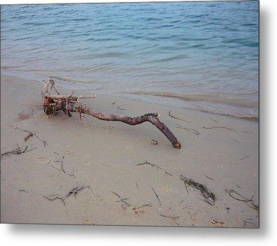 Driftwood On Ocean Beach Metal Print by Adrianne Wood
