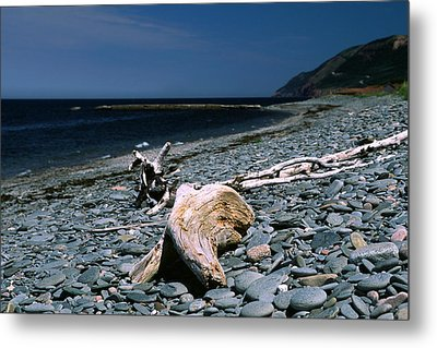 Driftwood On Rocky Beach Metal Print by Sally Weigand