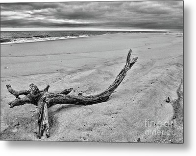 Metal Print featuring the photograph Driftwood On The Beach In Black And White by Paul Ward