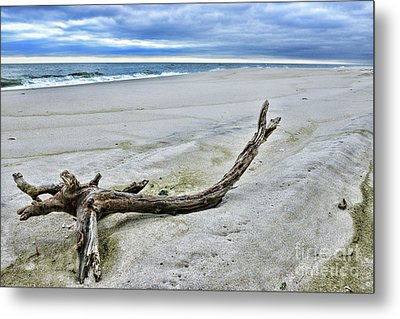 Metal Print featuring the photograph Driftwood On The Beach by Paul Ward