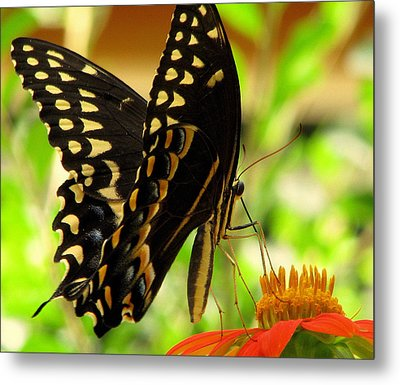 Drinking From A Straw Metal Print by Dottie Dees