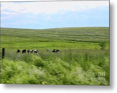 Driveby Shooting No.17 Cows Metal Print by Christine Segalas