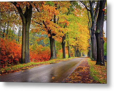 Metal Print featuring the photograph Driving On The Autumn Roads by Dmytro Korol