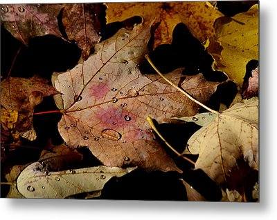 Metal Print featuring the photograph Droplets On Fallen Leaves by Doris Potter