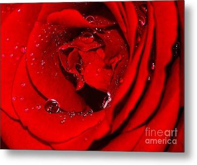 Droplets On Red Rose By Kaye Menner Metal Print by Kaye Menner