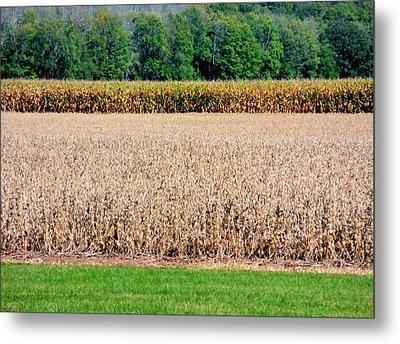 Dry Corn Field 1 Metal Print by Lanjee Chee