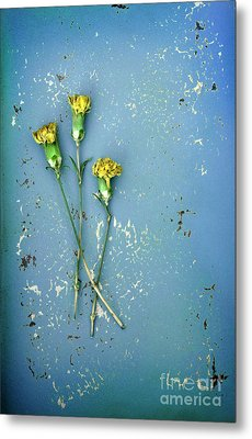 Metal Print featuring the photograph Dry Flowers On Blue by Jill Battaglia