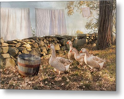 Metal Print featuring the photograph Drying Out by Robin-lee Vieira