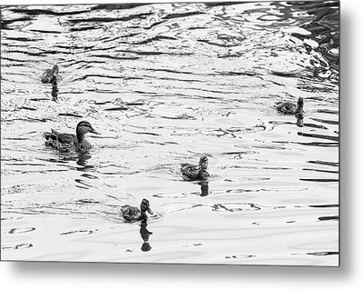 Duck And Ducklings Metal Print