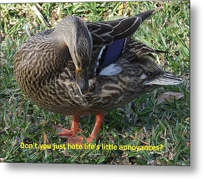Duck Annoyances Metal Print by Rana Adamchick