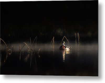 Metal Print featuring the photograph Duck Of The Morning Mist by Bill Wakeley