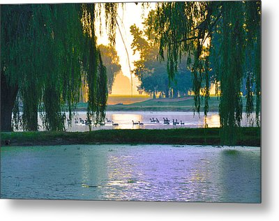 Duck Pond At Dawn Metal Print by Bill Cannon