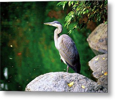 Duck Pond Heron Metal Print