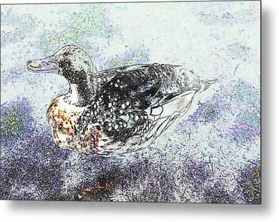 Metal Print featuring the photograph Duck With Fine Plumage by Nareeta Martin