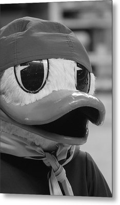 Ducking Around Metal Print by Laddie Halupa