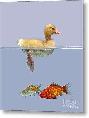 Duckling And Goldfish Metal Print by Jane Burton