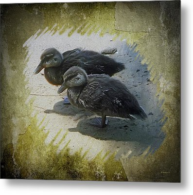 Duckling Siblings Metal Print