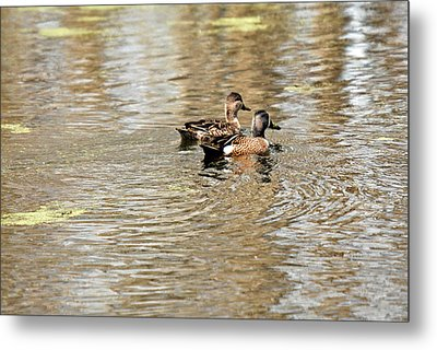 Metal Print featuring the photograph Ducks Together by Teresa Blanton