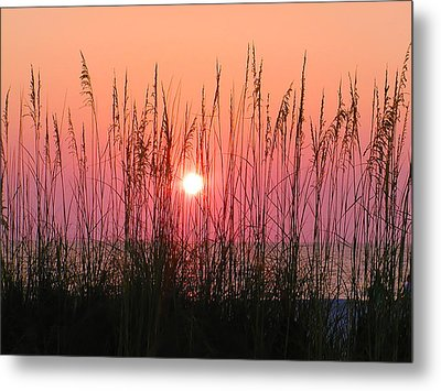 Dune Grass Sunset Metal Print by Bill Cannon