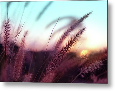 Metal Print featuring the photograph Dune Scape by Laura Fasulo