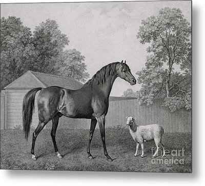Dungannon Metal Print by George Stubbs