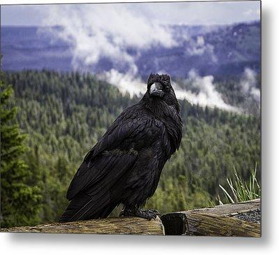 Dunraven Raven Metal Print