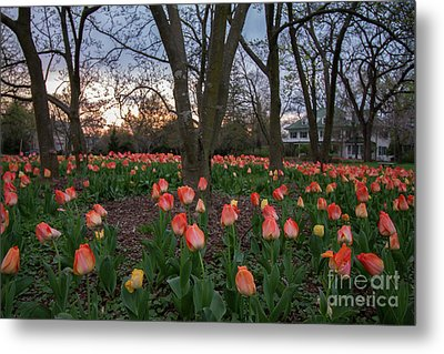 Metal Print featuring the photograph Dusk At Sherwood Gardens by Chris Scroggins