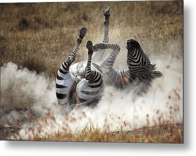 Dust Bath Metal Print by Michel Guyot
