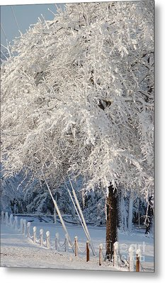 Dusted With Powdered Sugar Metal Print