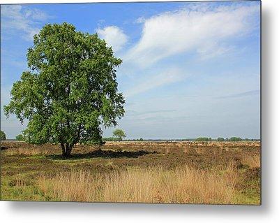 Dutch Landscape, Nature Reserve Dwingelderveld Metal Print