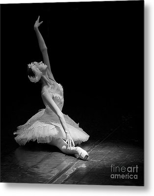 Dying Swan II. Metal Print by Clare Bambers