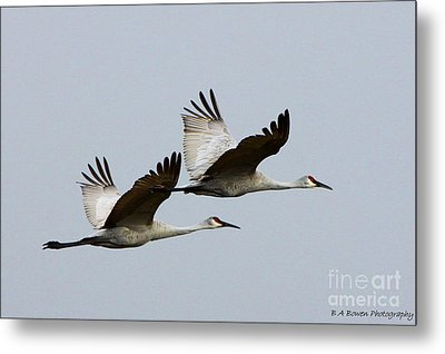 Dynamic Duo Metal Print by Barbara Bowen