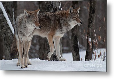 Dynamic Duo Metal Print