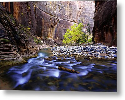 Metal Print featuring the photograph Dynamic Zion by Chad Dutson