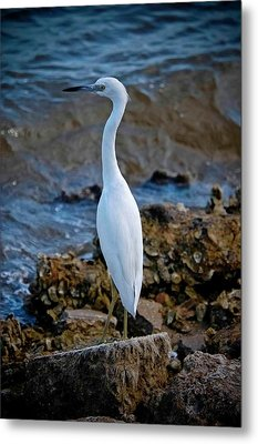 Eager Egret Metal Print by DigiArt Diaries by Vicky B Fuller