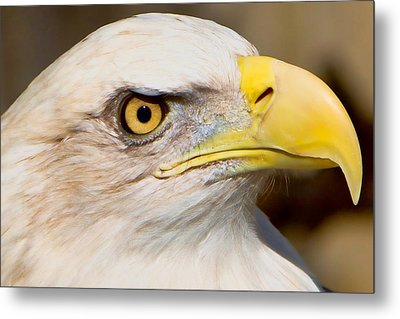 Eagle Eye Metal Print by William Jobes