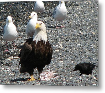 Eagle Feast Metal Print