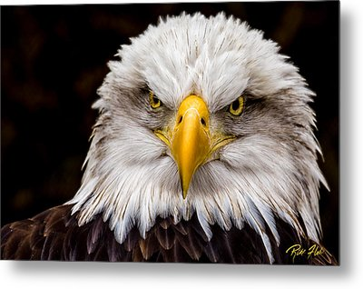 Defiant And Resolute - Bald Eagle Metal Print by Rikk Flohr