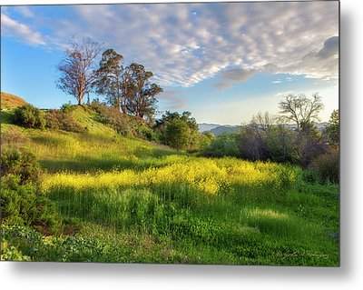 Metal Print featuring the photograph Eagle Grove At Lake Casitas In Ventura County, California by John A Rodriguez