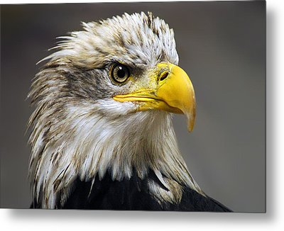 Eagle Metal Print by Harry Spitz