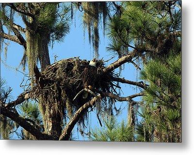 Eagle Nest Call Metal Print