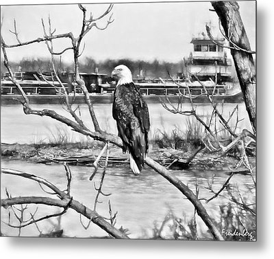 Eagle On The Illinois River Metal Print