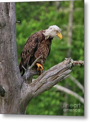 Metal Print featuring the photograph Eagle Point Of View by Debbie Stahre